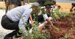 Etiópiában több mint 353 millió fát ültettek ki egyetlen nap alatt