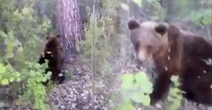 Érthetetlne módon felhívta magára a medve figyelmét, keményen ráfizetett