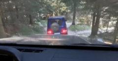 Nehéz terhelési tesztnek vetettek alá az erdőben egy Mercedes G-t