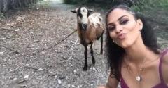 Amikor egy kecske találkozik egy bakkecskével