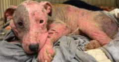A kutyus azután, hogy élve égett, szinte halottaiból támadt fel, és csodálatos átalakuláson ment át