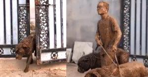 Annyi volt a feladata, hogy megsétáltassa ezt a három kedves kutyust. Egyértelmű, hogy ki diktálta a tempót és az irányt