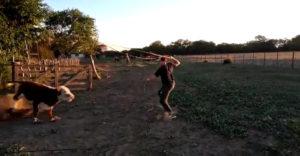 A reményteljes cowboy pofára esett az edzésen. Lefejelte őt a bika