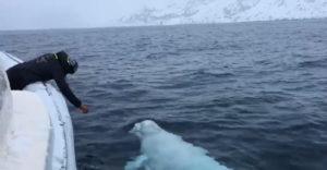 Aha, figyelj! Megtanítottam egy bálnát apportírozni