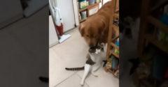 Ha nem megy a macska a gazdához, akkor a kutya megy a macskához