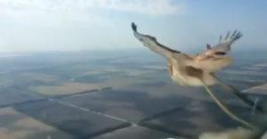 A Boeing 737 pilótafülkéjében levő kamera rögzítette a repülőgép ütközését egy madárral