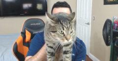 Dicsekedni akart a jó macskájával. Az rohamot kapott és jól összekarmolta őt.