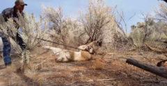 Ki akarta szabadítani a pumát az orvvadász csapdájából (Veszélyes segítségnyújtás)