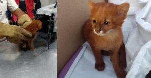 A lány befogadott egy utcán talált cicát. Néhány hónap múlva azonban nagyon meglepődött