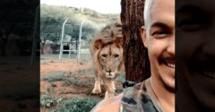 Leült a fa elé és hagyta, hogy az oroszlán hátulról közelítse meg