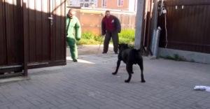 Házőrző kutya kiképzése a lehető legmagasabb szinten
