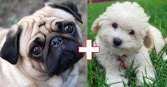 10 alkalom, amikor két teljesen különböző kutyafajtának született kölyke