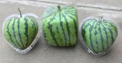 Ezek a világ legdrágább gyümölcsei. Melyiket kóstolnád meg közülük?