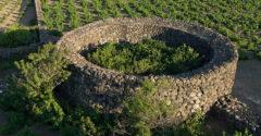 Kőfallal védett citruskertek egy apró olasz szigeten