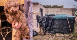 Váratlan látogatók jelentek meg egy révkomáromi illegális kutyaszaporítóban. Kis ketrecek, tele mocsokkal