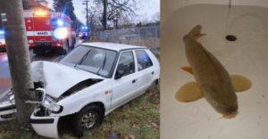 Karácsonyi ponty okozott közúti balesetet Csehországban. Hogy hogyan?
