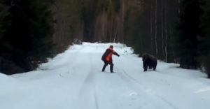 Egy medve támadta meg, de a félelmet nem ismerő svéd férfi hangos kiabálással elriasztotta