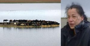 100 ló rekedt egy mocsaras szigeten. 7 bátor és elszánt nő mentette ki őket hihetetlen módon