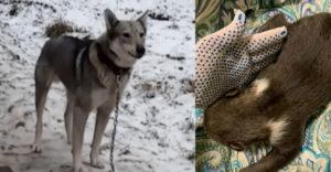 A kutya hazavitt egy kölyköt, ami első pillantásra kölyökkutyának tűnt. Azonban ez nem így volt