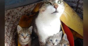 Egy nő állatorvoshoz vitte a macskáját, mert havonta cicákat szült. A doki aztán felvilágosította a tévedéséről.