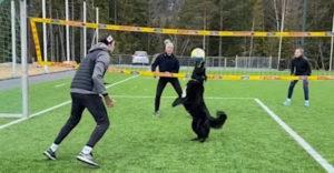 Amikor a kutyád jobban megtanul röplabdázni, mint te