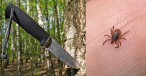 Egy egyszerű módszer, amelynek köszönhetően biztonságosan megszabadulhatsz egy kullancstól egy kés segítségével