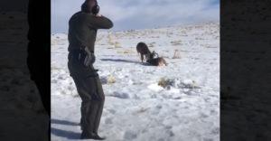 Két szarvas életét mentette meg egyetlen lövés