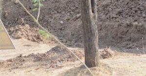 Látod a leopárdot a fotón? Csak nagyon kevesen veszik észre.