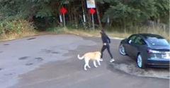 Ha nem kell a kutya, egyszerűen csak ne vegyél. Szívszorító látvány