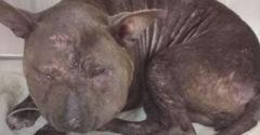 Amikor megtalálták az állatmentők, azt sem tudták megállapítani, milyen fajhoz tartozik. Átalakulása sokakat meghatott.