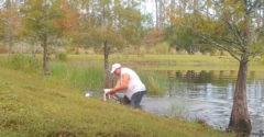 Szivarral a szájában ugrott a vízbe, hogy lebirkózza a kiskutyáját elragadó aligátort a 74 éves floridai nyugdíjas