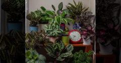 Milyen mozgást végeznek a növények 24 óra leforgása alatt
