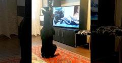 Mit csinálnak otthon a kutyák, amíg a gazdi karanténban van? (E-edzés)