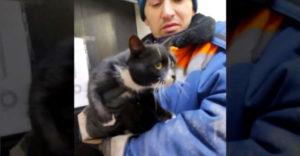 Szegény macskát egy nejlonzacskóban dobták ki a szemétbe. Az osztályozó szalagon dolgozó munkás mentette meg végül.