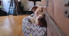Egy sérült szemű kutyát mentettek meg az utcán. Mára egy boldog kutyus lett belőle.