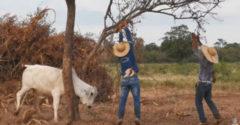 Kiszabadították a csapdába esett bikát, aki jutalomból jól megtámadta őket.