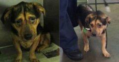 A házaspár meglátja a legszomorúbb kutya képét és örökbe is fogadták, a menhelytől kapott figyelmeztetések ellenére
