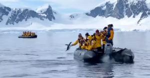 A pingvin észvesztve menekült a kardszárnyú delfin elől. Menedékét az embereknél lelte
