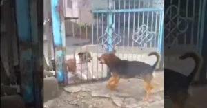 Amikor a házőrző kutya visszatér a szünetről
