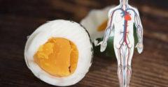 Mi történik a testeddel, ha naponta fogyasztasz tojást?
