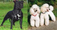 A tudósok felállították a 22 legagresszívebb kutyafajta rangsorát. Az első helyeken szereplők sokakat megleptek.