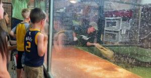 Elkapta a gondozó kezét egy aligátor, egy látogató mentette meg őt (Hős az állatkertben)