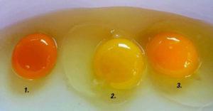 Melyik tojás a legegészségesebb? Elárulja a sárgája színe